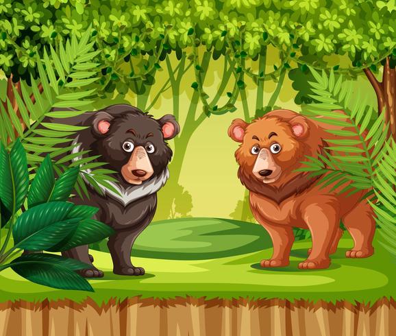 Ursos na selva