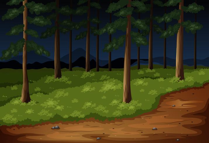 Cena de floresta com árvores e trilha à noite