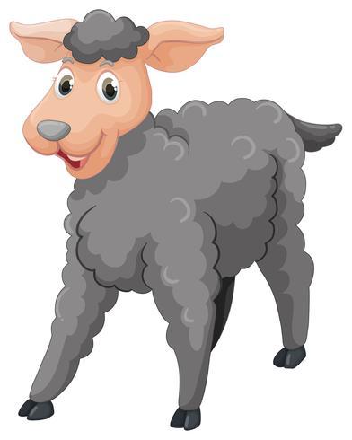 Pecore grigie con faccia felice