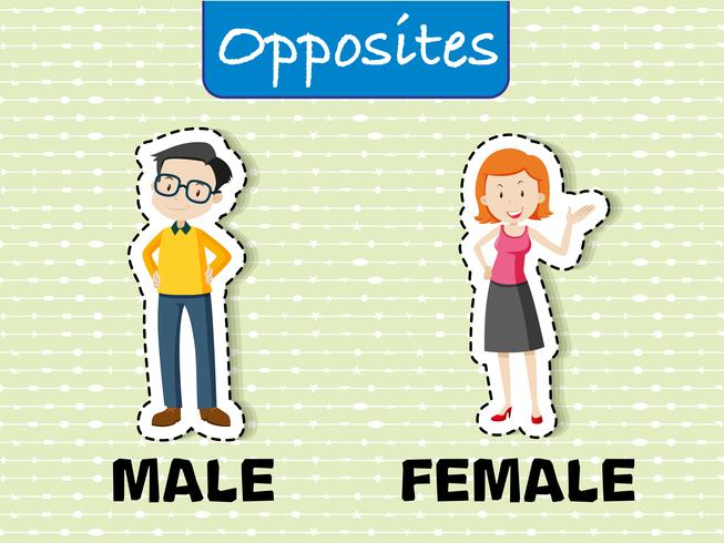Opposite words for male and female vector