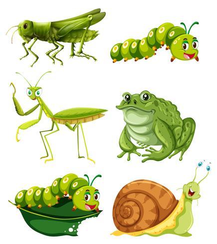 Différents types d'insectes de couleur verte