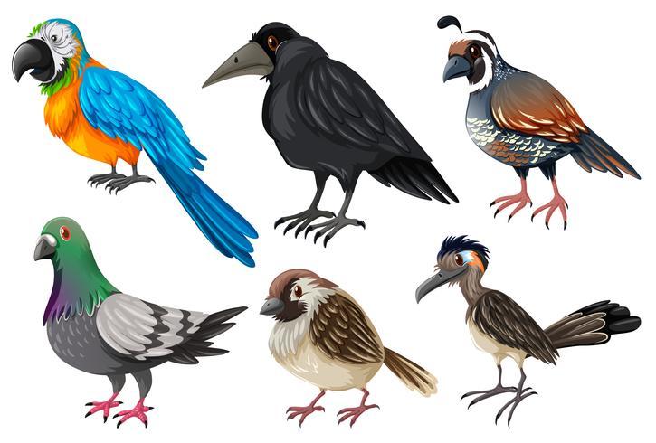 Diferentes tipos de aves silvestres.