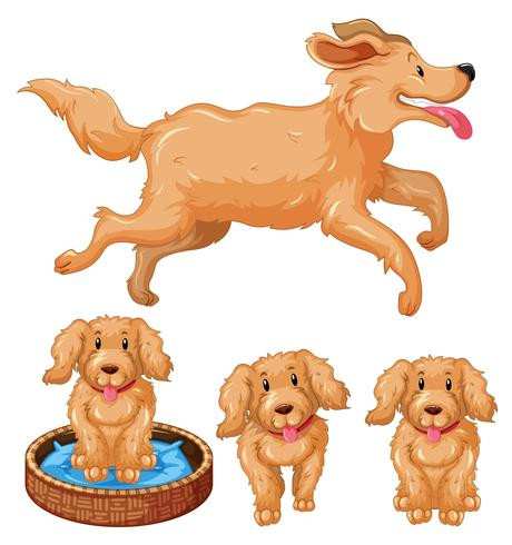 Perro y cachorros con pelaje marrón. vector