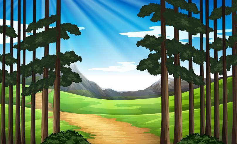 Background scene with hiking track in forest - Download Free Vector Art, Stock Graphics & Images