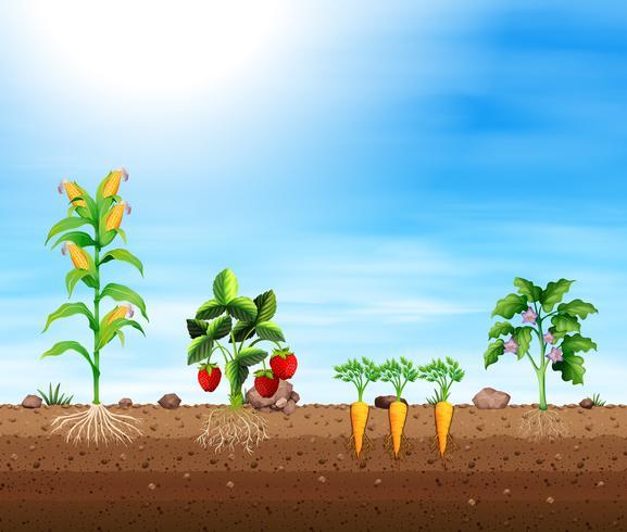 Set verschiedene Ernten