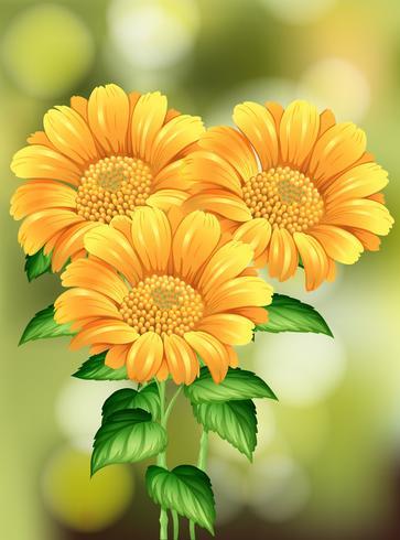 Schöne Sonnenblume auf Naturhintergrund