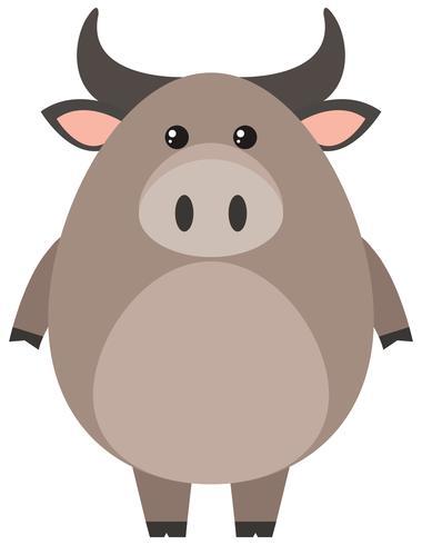 Búfalo con cuerpo redondo.