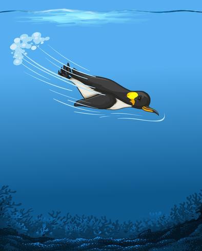 Un pinguino che nuota sott'acqua
