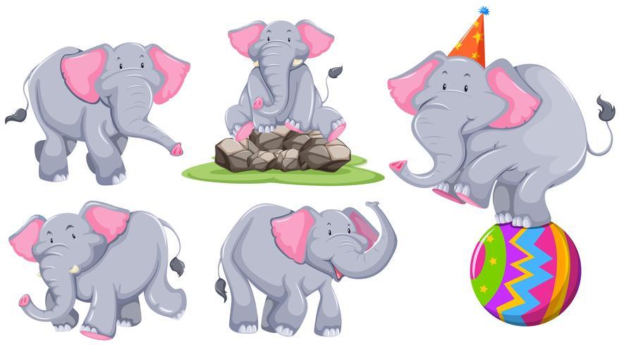 Éléphant gris dans différentes actions