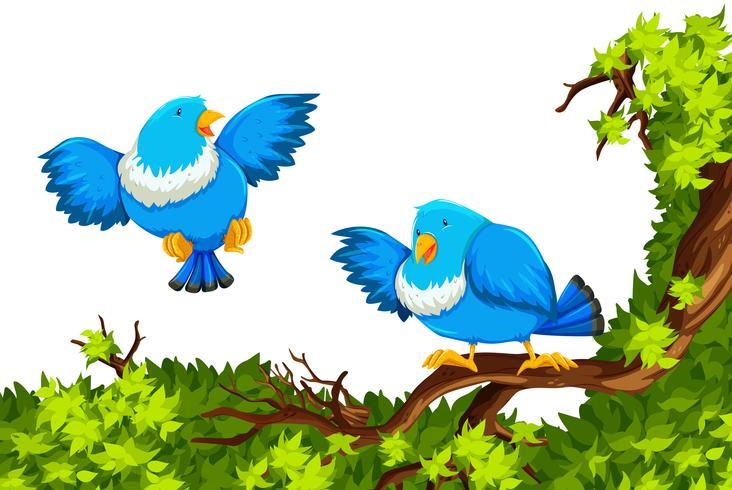 Uccelli blu sul ramo