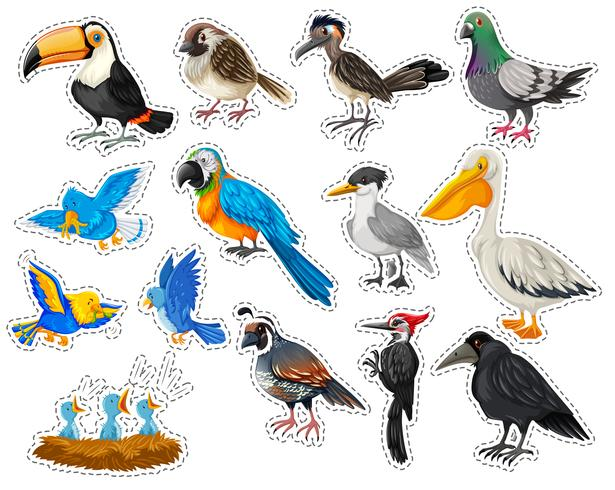 Sticker set with many types of birds vector