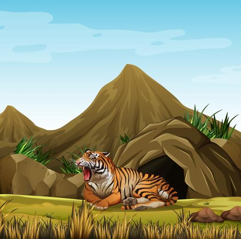 Wild tiger in front of cave