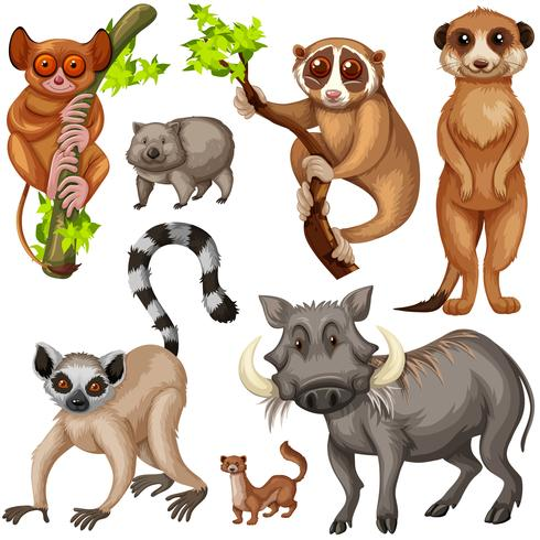 Different types of wild animals on white background