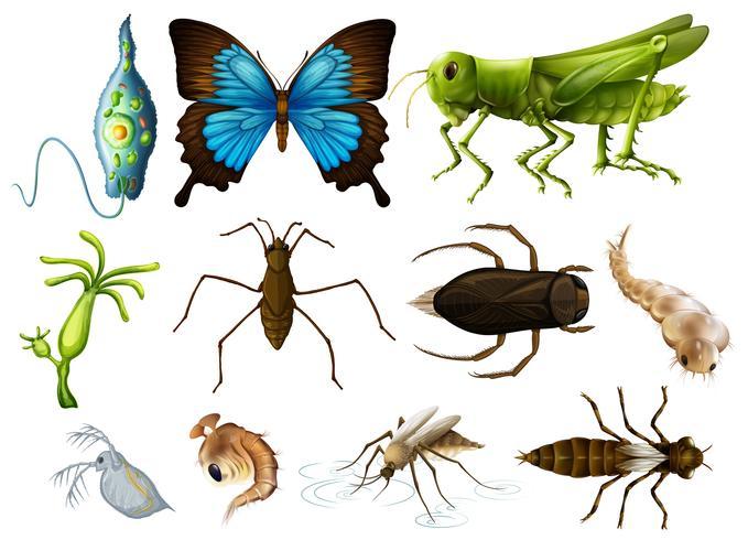 Différents types d'insectes sur fond blanc