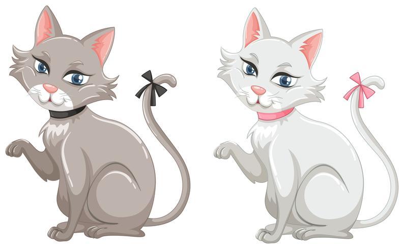 Katten met grijze en witte vacht