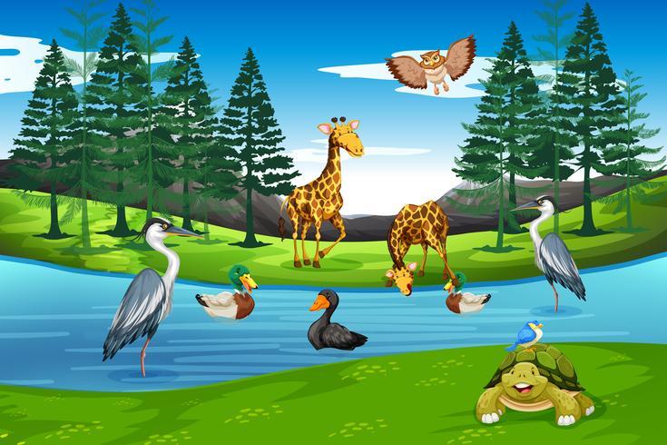 Muchos animales en la naturaleza
