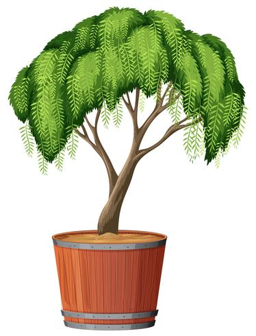 Ett träd plantering i potten