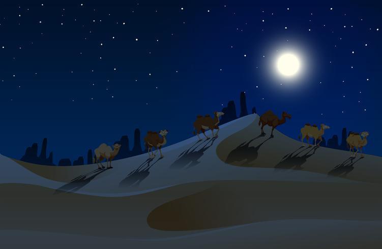 Camellos caminando por el desierto en la noche