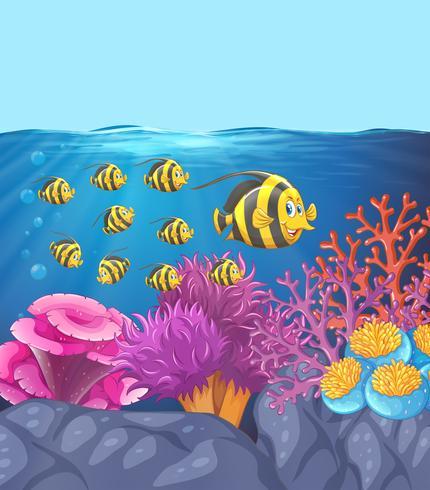 School van vissen in koraalrif