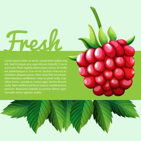 Fresh rasberry with text