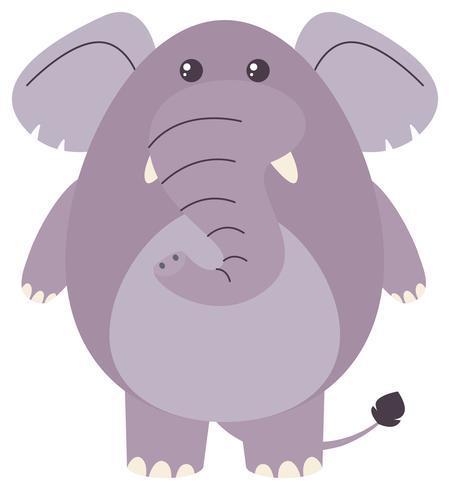 Fetter Elefant auf weißem Hintergrund