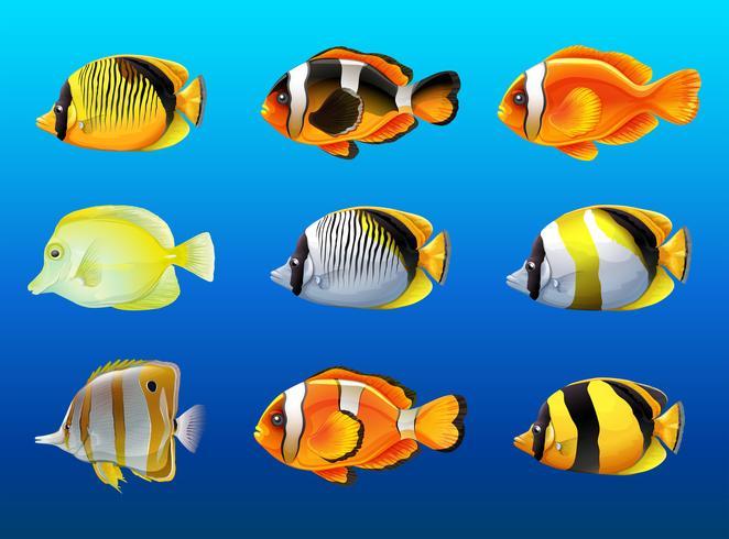 Diferentes tipos de peces bajo el océano.