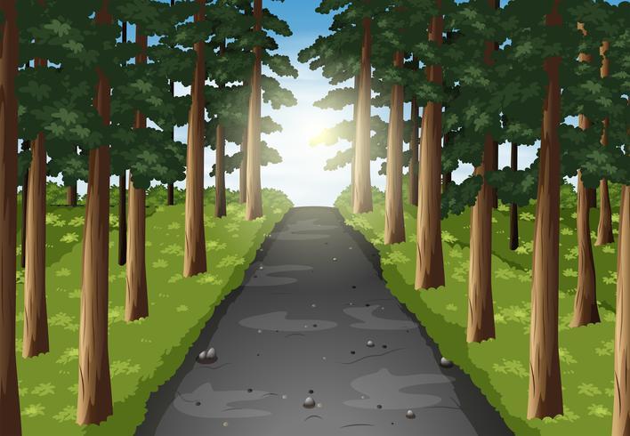 Hintergrundszene der Straße im Wald