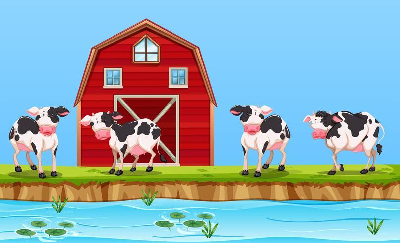 Vache à la ferme rurale