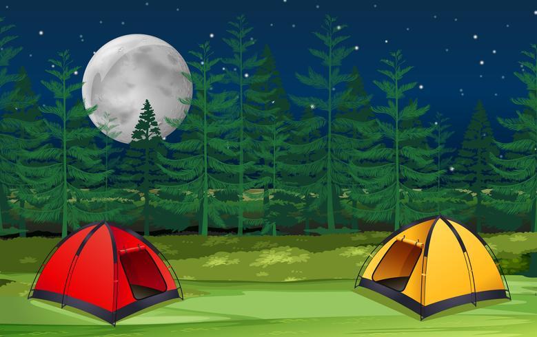 Duas dezenas em bosques na cena noturna vetor