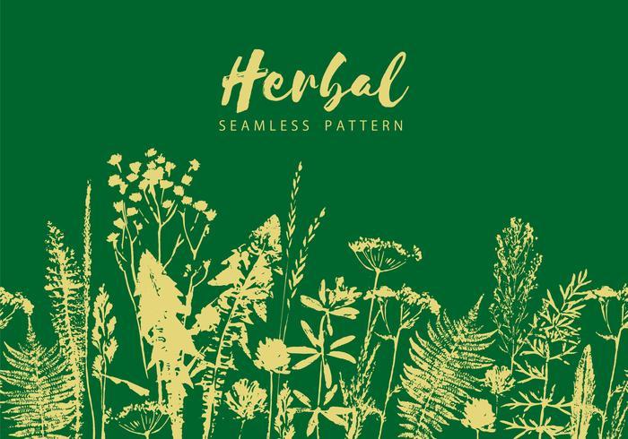 Herbal seamless pattern. Botanical border. Vector grass background.