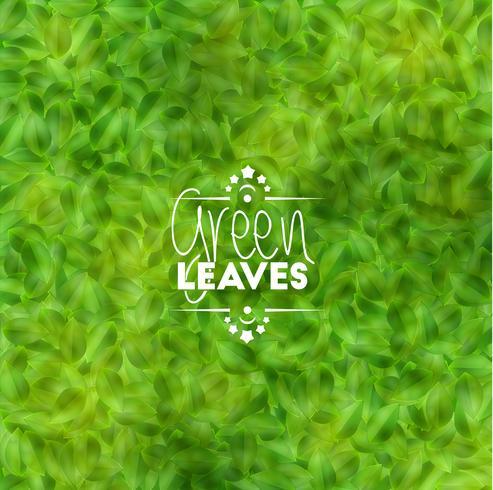 Fondo de hojas verdes, vector