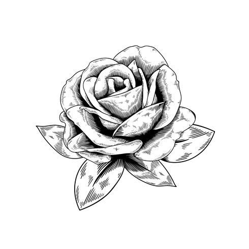 Icona di vettore della natura del fiore del disegno di Rosa su fondo bianco