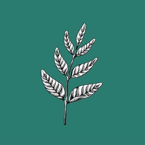 Feuilles sur les branches dessin icône vector nature sur fond vert