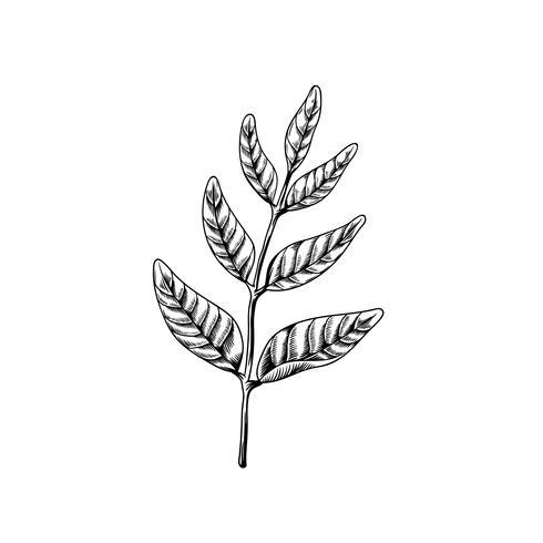 Foglie sui rami disegno icona di natura vettoriale su sfondo bianco