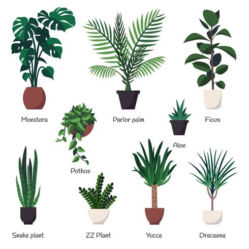 Vector  set of various common indoor ornamental plants with names.