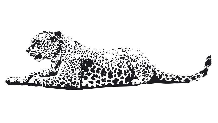 Arte de vector de leopardo