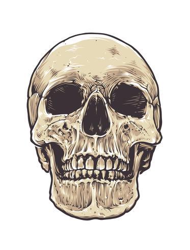 Cráneo anatómico de grunge vector