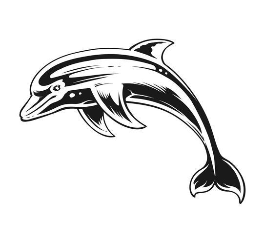 Dolphin Black & White Contrast Vector Art