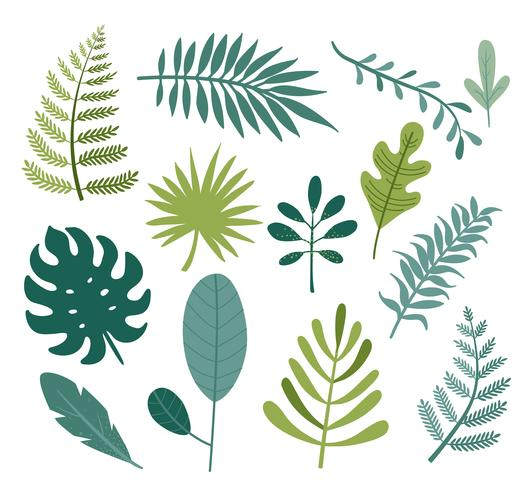 Set of different tropical and other isolated leaves.