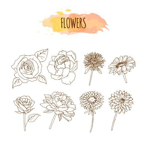 Conjunto de flores dibujadas a mano. Ilustración floral. vector