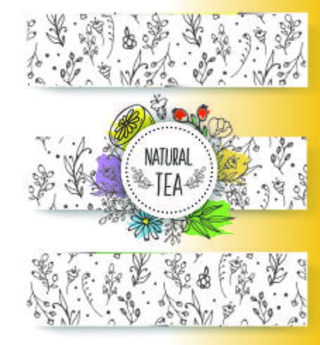 Colección de banners de té de hierbas. Hierbas orgánicas y flores silvestres. Mano bosquejó frutas bayas ilustración.