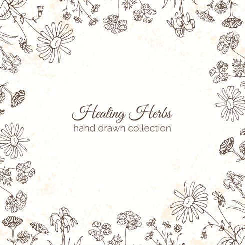 Ilustración de hierbas. Marcos florales. vector