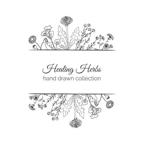 Holistic Medicine. Healing Herbs Illustration.