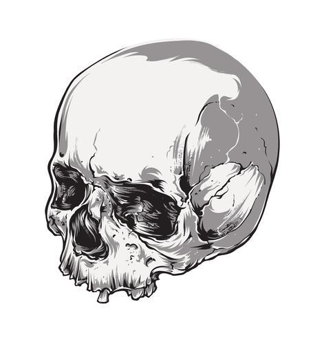 Skull Vector Art