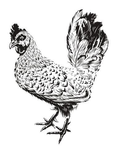 Vektor Rooster Illustration