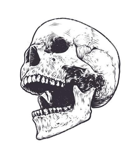 Anatomischer Schädel-Vektor