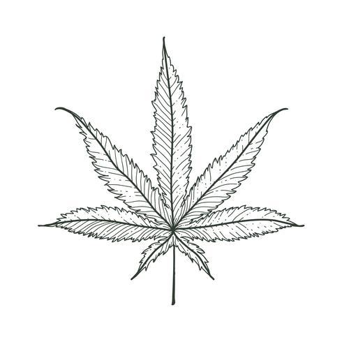 vektor marihuana blad