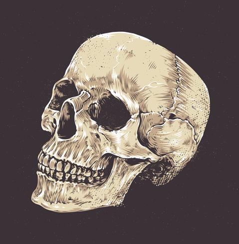 Anatomisk Grunge Skull