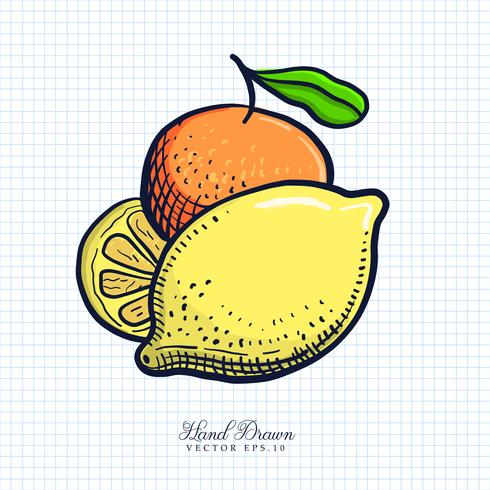 Hand Drawn Fruit & Vegetable Illustration vector