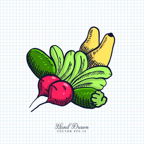 Hand Drawn Fruit & Vegetable Illustration vector